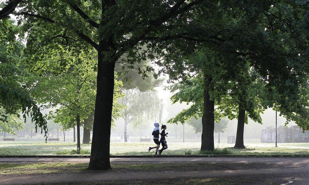 Jogging Fitness Jogger Movement Fit Run Park